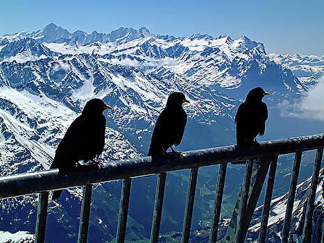 Crows On Top Of Mount Titlis - Switzerland by Joseph Hendrix