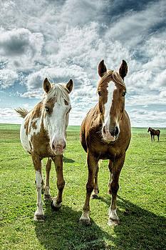 Curious Friends by Kristal Kraft