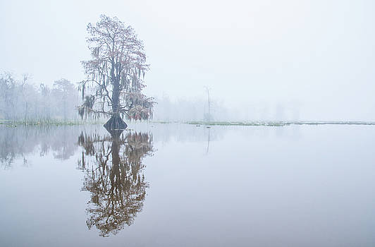 Cypress in reflection by Andy Crawford