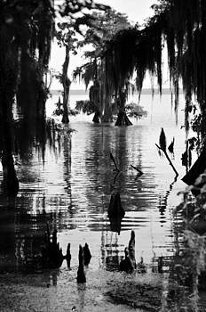 Cypress Swamp by Shawn McElroy