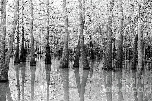 Scott Pellegrin - Cypress - Tupelo Swamp North Louisiana BW