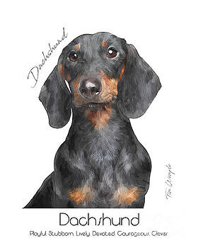 Dachshund Poster by Tim Wemple