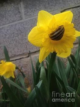 Daffodilling Snail vers 1 by Iris Newman