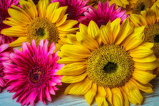 Daises And Sunflowers by Garry Gay