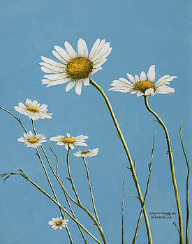 Daisies in the Wind by Mary Ann King