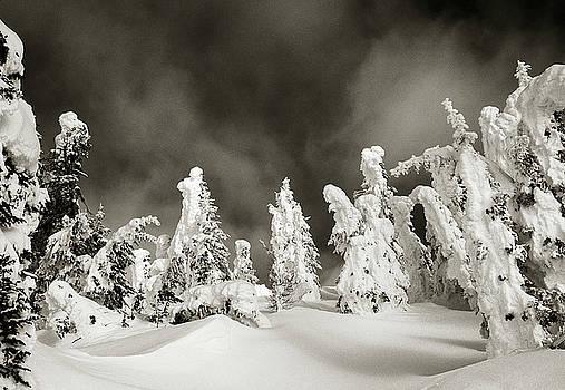 Scott Wheeler - Dance of the Trees