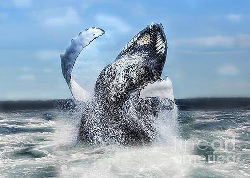 Dances With Whales by Nancy Dempsey