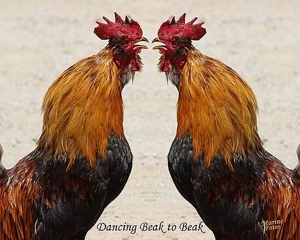 Gary Canant - Dancing Beak to Beak