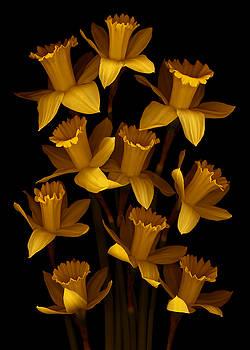 Marsha Tudor - Dark Daffodils