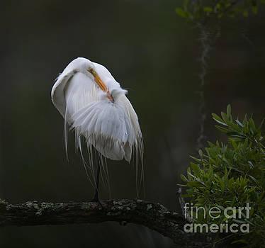 Dale Powell - Heron Grooming