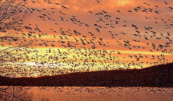 Dawn Departure by Dan Myers