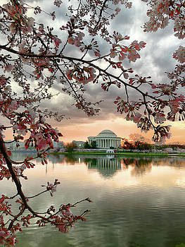 DC Cherry Blossoms by David Posey