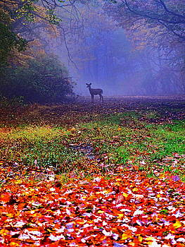 Deer in the Mist by DVP Artography