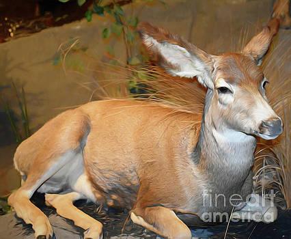 Deer by Ray Shrewsberry