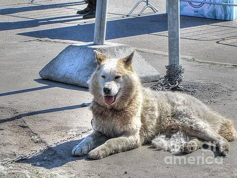 Dog by Yury Bashkin
