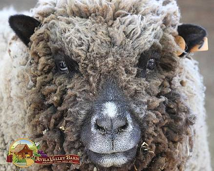 Gary Canant - Dolly the Sheep