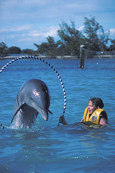 Dolphin at Hawks Cay by Carl Purcell