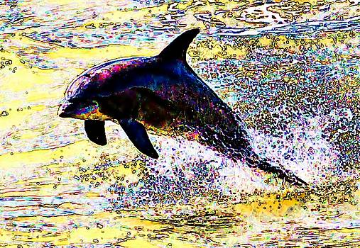 Dolphin by John Collins