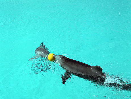 John Bowers - Dolphins Playing in Pool