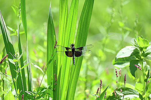 Dragonfly by Ronda Ryan