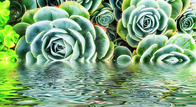 Dramatic Succulent by Janice Sullivan