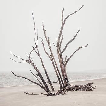 Andrew Wilson - Driftwood In High Key
