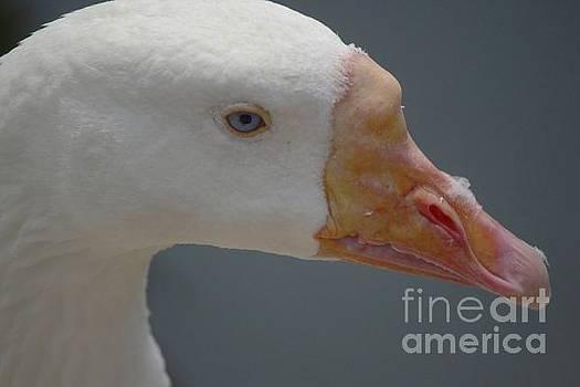Paulette Thomas - Duck Duck Goose