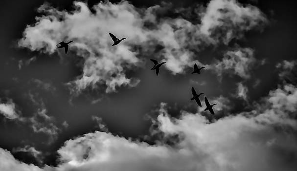 Leif Sohlman - Duck silhouettes BW #g1
