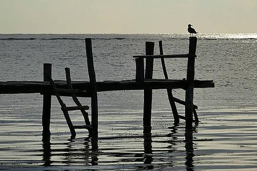 Skip Hunt - Early Bird