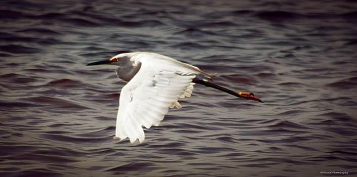 Egret In Flight  by Debra Forand
