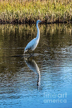 Egret  by Thomas Marchessault