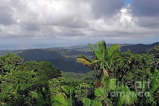 Gary Wonning - El Yunque Rainforest
