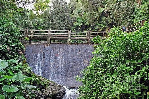 Gary Wonning - El Yunque waterfall