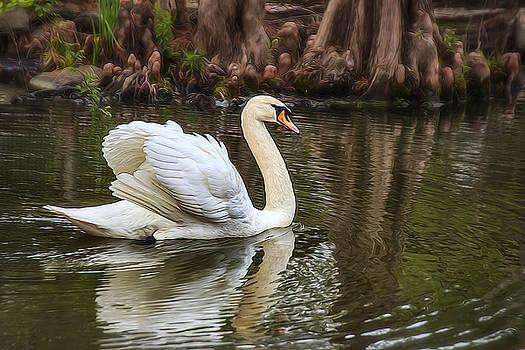 Elegant Swan by Laura Greene