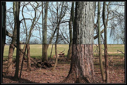 TNT Images - Elk - 400290