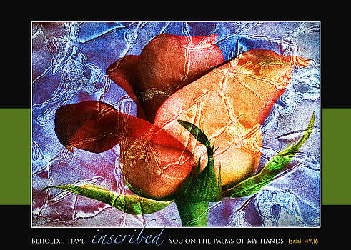 Etched Rose by Lorna Rande