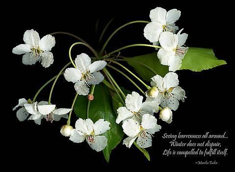 Evergreen Pear by Marsha Tudor