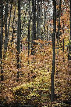 Fall at Tygart Lake by Steve Konya II