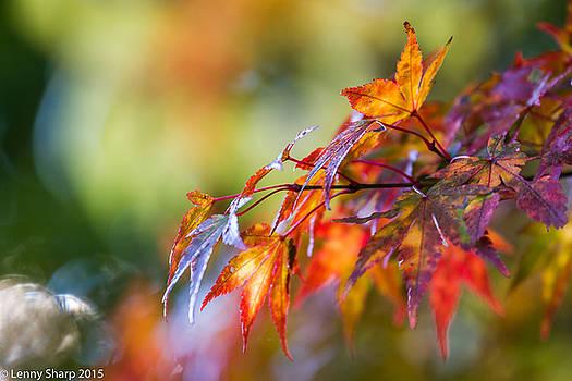 Leonard Sharp - Fall Color