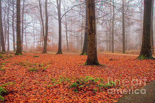 Fall foliage in foggy forest by Patricia Hofmeester
