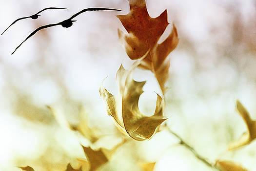 Fall leaves by Fernando Cruz