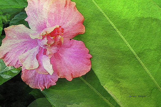 James Temple - Favorite Flower Digital Watercolor