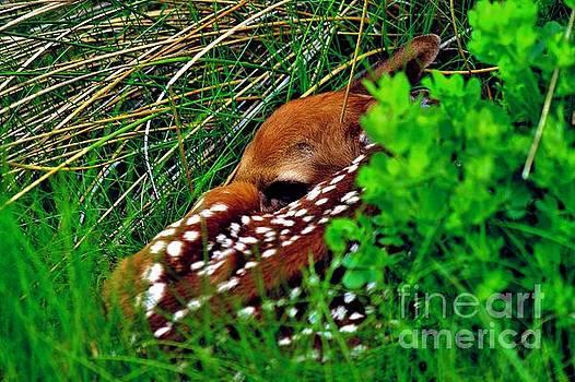Matthew Winn - Fawn in the Grass