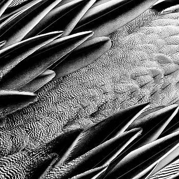 Nikolyn McDonald - Feathers - Abstract