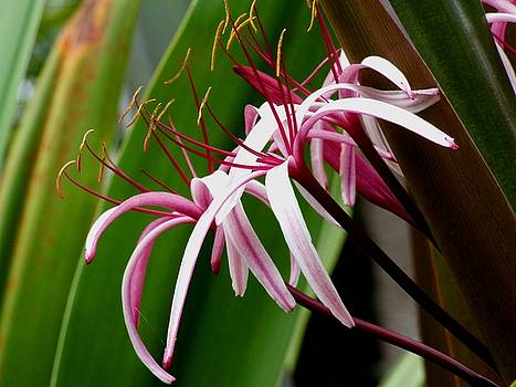 Feathery Flowers by Michiale Schneider