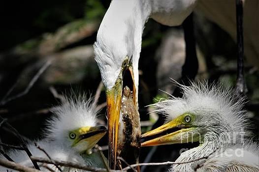 Feeding Time by Paulette Thomas