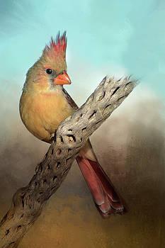 Barbara Manis - Female Cardinal