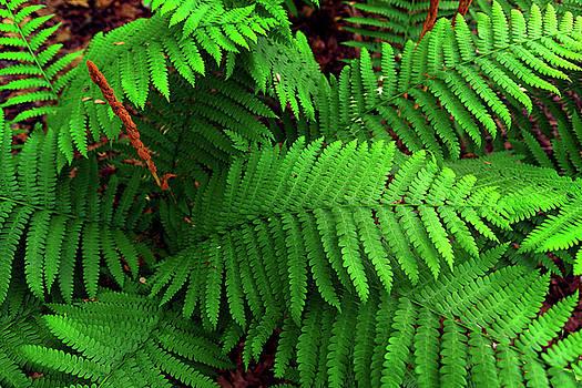 Ferns  by Rick Berk