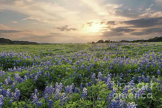 Field of Blue by Cathy Alba