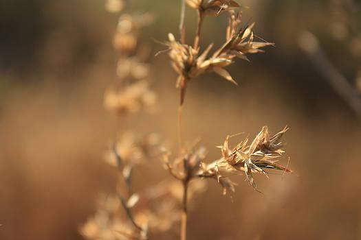 Fine crop by Vishakha Bhagat